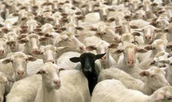 KOLEKTIVIZAM: Nova religija u BiH