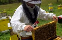 Sistemska podrška pčelarstvu i školovanje pčelara - šansa za ruralni razvoj i smanjenje nezaposlenosti