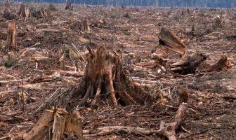 World Wide Fund for Nature: Priroda virusima uzvraća zbog uništenih šuma, staništa divljih životinja