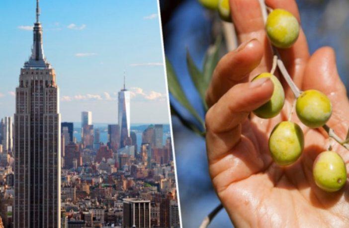 Iz New Yorka stiglo zlato i srebro za maslinova ulja iz BiH